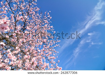Spring flowers with blue background and clouds - stock photo