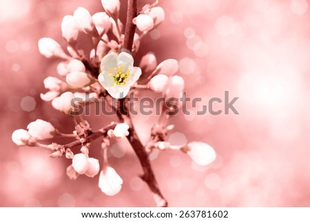 Spring flowers with blurred background and place for your text - stock photo