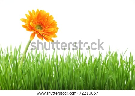 Spring flowers with fresh grass background - stock photo