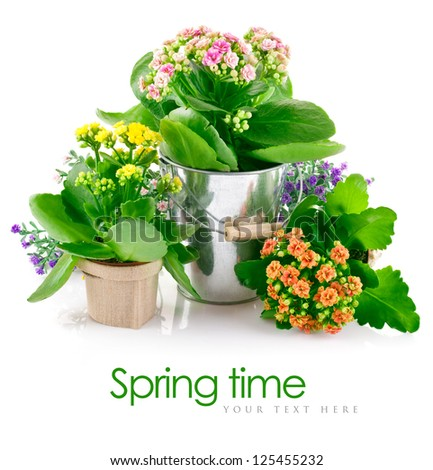 spring flowers with green leaves in bucket isolated on white background - stock photo