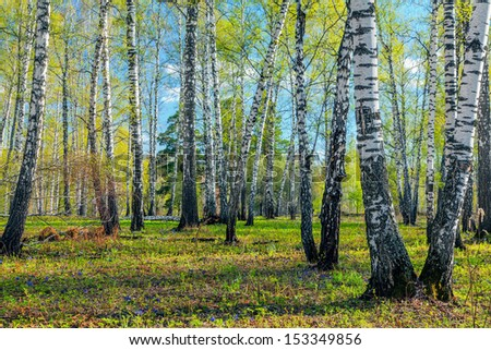 Spring Forest. - stock photo