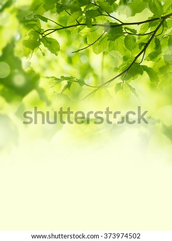 spring forest - fresh leaves and sun rays - stock photo