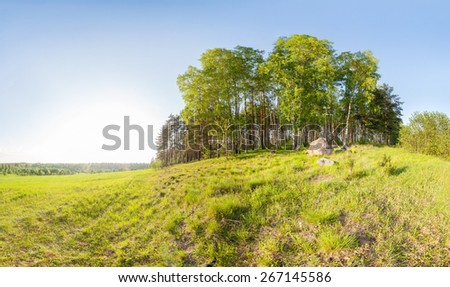 Spring forest. landscape - stock photo