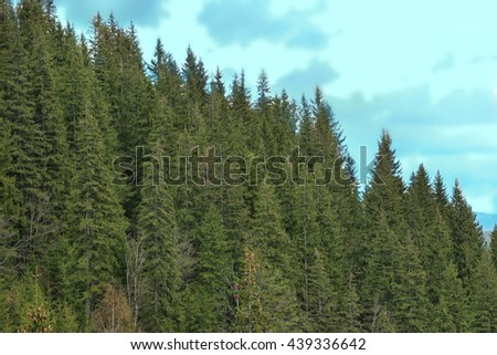 Spring forest on mountain slopes - stock photo