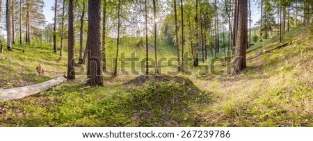 Spring forest. The Landscape. - stock photo