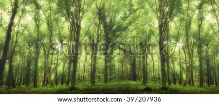 spring forest trees. nature green wood sunlight backgrounds. fog - stock photo
