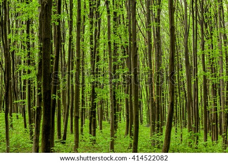 spring forest trees. nature green wood sunlight backgrounds. sky - stock photo