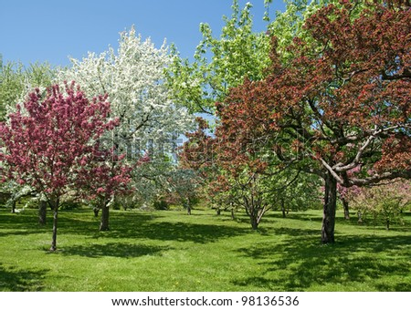 Spring garden. Beautiful trees in bloom on a sunny day. - stock photo