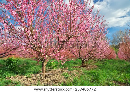 Spring garden. Blooming trees. Nature composition. - stock photo