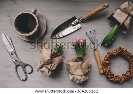 spring garden preparations. Hyacinth flowers and vintage tools on table, top view. Seasonal hobby at home. Selective focus. - stock photo