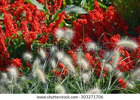 Spring Garden with Close Up of Fountain Grass - stock photo
