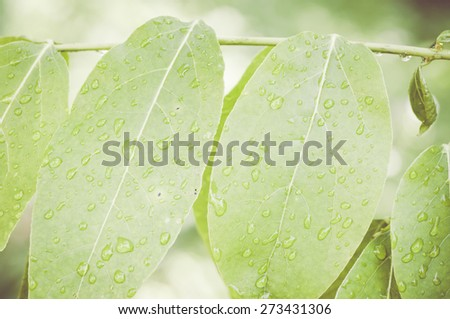 spring gardens abstract background - water droplets on green leaves - stock photo