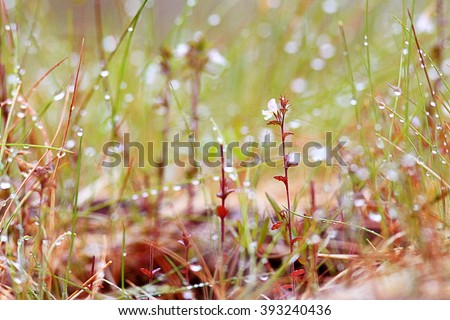 Spring grass blurred background bokeh - stock photo