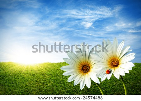 Spring grass field with two daisies and a lady-bug - stock photo