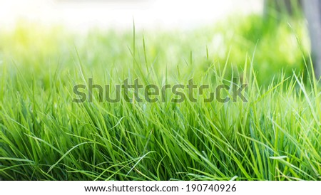 spring grass in sun light and nature background.
