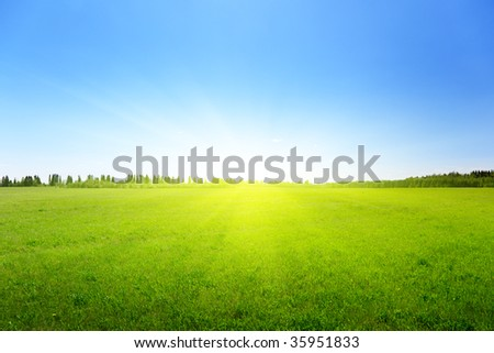 spring green field of grass - stock photo