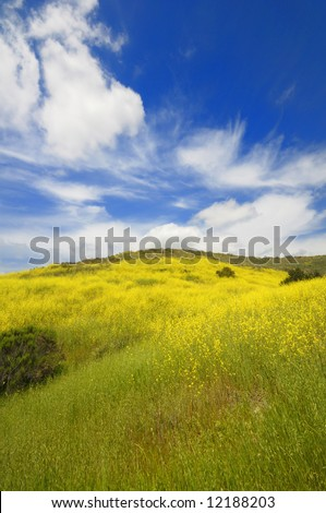 Spring green fields and wild flower under the blue sky
