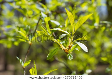 Spring green forest with lush foliage. - stock photo