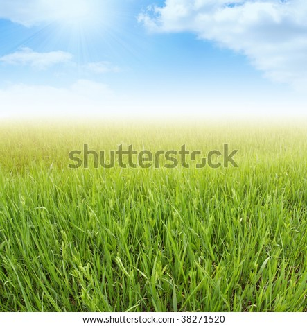 spring green grass and blue sky - stock photo