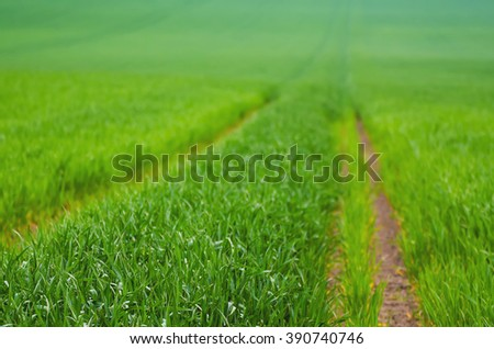 Spring  green grass  field with tracks suitable for backgrounds or wallpapers, natural seasonal landscape - stock photo