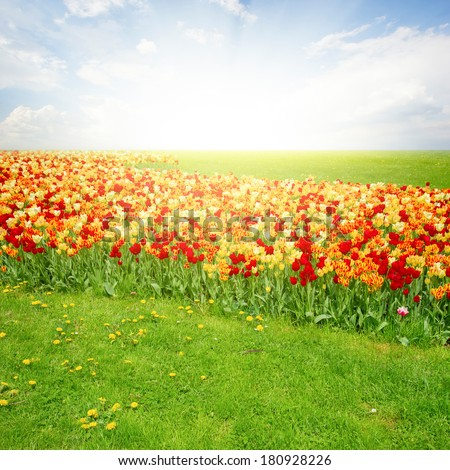 spring green lawn with tulips in sunny day - stock photo