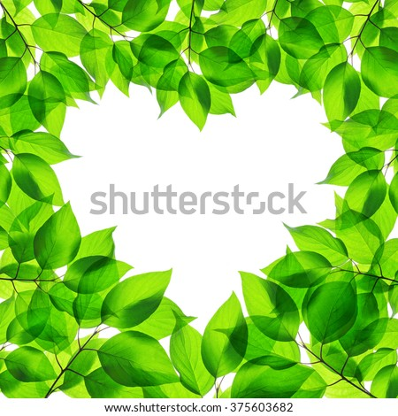 Spring green leaves in heart shape on white background - stock photo
