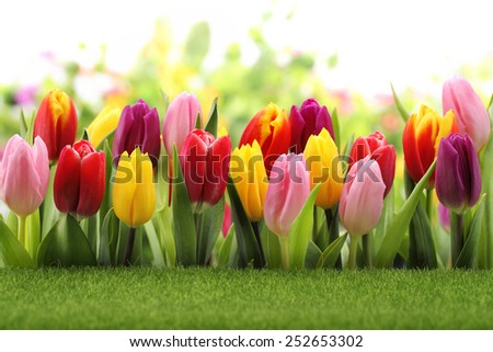 Spring green meadow with tulips - stock photo