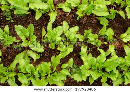 Spring green seedling on bed with soil - stock photo
