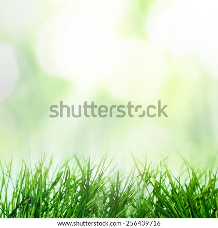 Spring growing grass under the leaf bokeh and sunlight