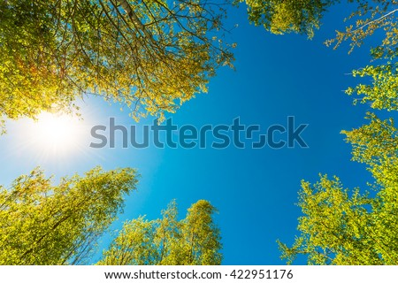 Spring in a birch grove, insects flying in the air. View of the tops of the birch trees in the sunlight from the ground level - stock photo