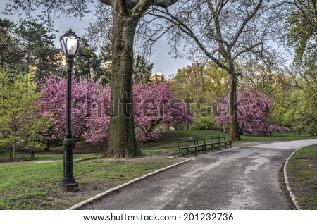 Spring in Central Park in Central Park, New York City with cherry trees - stock photo