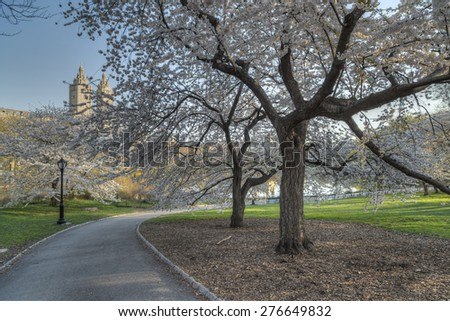 Spring in Central Park, New York City by the cherry trees - stock photo