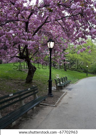 spring in Central Park with Japanese Cherry trees - stock photo