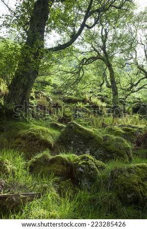 Spring  in green, mossy Forest, Scotland