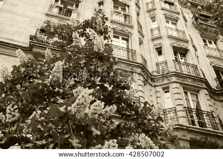 Spring in Paris. Blossoming Chestnut tree and typical Parisian building. Aged photo. Sepia. - stock photo