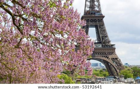 Spring in Paris. Blossoming jacarandas and the Eiffel Tower. Focus on jacarandas - stock photo