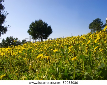 spring in the country side of Catalonia, Spain - stock photo