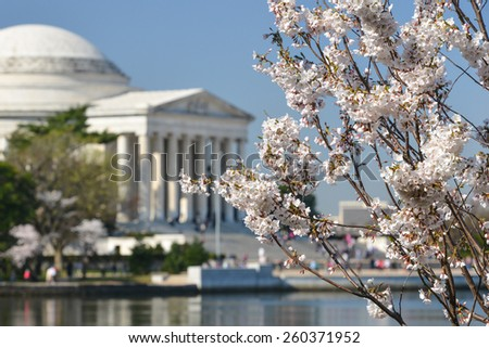 Spring in Washington DC - Cherry Blossom Festival at Jefferson Memorial - stock photo