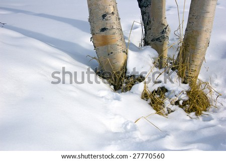 Spring is on its way - stock photo