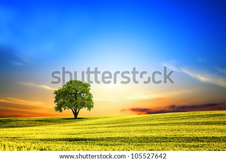 Spring landscape at sunset - stock photo