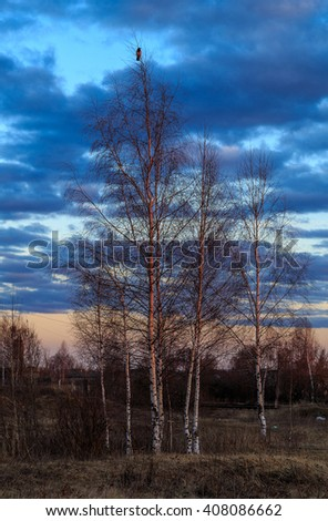 Spring landscape, birch with leaves, crow on the top branch, April evening - stock photo