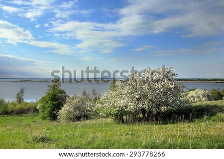 spring landscape flowering apple trees on the river bank at sunset