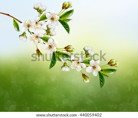 spring landscape. Flowering cherry tree. Spring flowering garden.