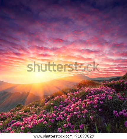 Spring landscape in mountains with Flower of a rhododendron and the sky with cloud - stock photo