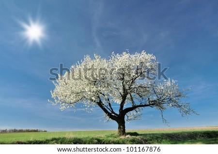 Spring landscape in Poland - stock photo