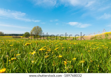 Spring landscape in southern Mecklenburg, Germany, dandelions, fresh green meadows and rapeseed field - stock photo