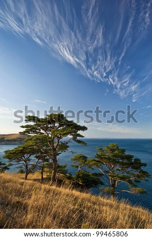 Spring landscape with beautiful clouds and a group of pines, lit by the setting sun. Japan Sea.