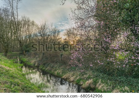 Spring Landscape With Blossoming Tree At A Small Creek