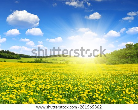Spring landscape with dandelions on meadow - stock photo
