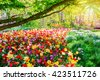 Spring landscape with multicolor tulips. Nature background - stock photo